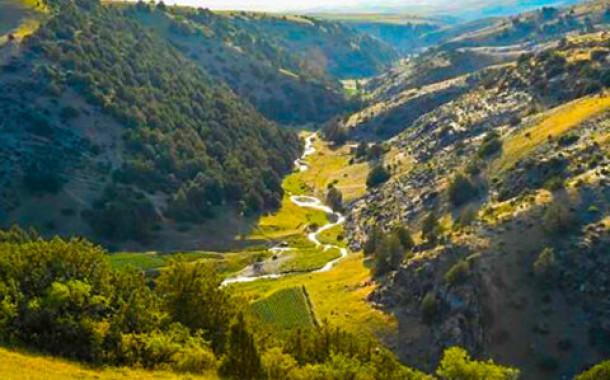 알타이산맥서 5200년 전 곡물 발견